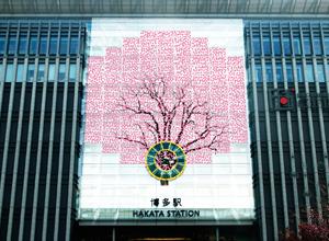 news20140220_sakura-thumb-300xauto-40713.jpg